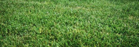Zielona trawa naturalna zdjęcia stock