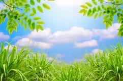 Zielona trawa, niebieskie niebo i zieleń liść Zdjęcia Royalty Free