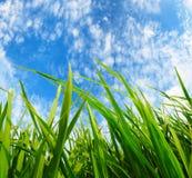 Zielona trawa, ochrony środowiska pojęcie Obrazy Royalty Free