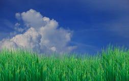Zielona trawa opuszczać pierwszego plan mlejący i niebieskie niebo biel Zdjęcia Royalty Free