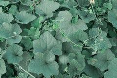 Zielona trawa piłka nożna odgórny widok lub zielony sztuczny trawy tło obrazy royalty free