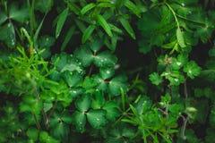 Zielona trawa po deszczu w lecie obraz royalty free
