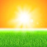 Zielona trawa pod słońcem royalty ilustracja