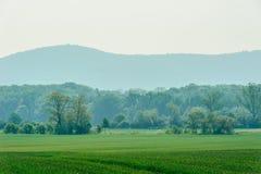 Zielona trawa pola i góry ÅšlęŠ¼ a Zdjęcia Royalty Free