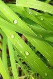 Zielona trawa & Przeczuwa krople Zdjęcia Royalty Free