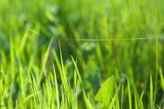 Zielona trawa przez słońce promieni Obraz Stock