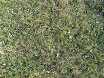 zielona trawa przy wiosna czasem Obrazy Royalty Free