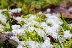 Zielona trawa przychodzi życie Zdjęcia Royalty Free