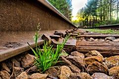 Zielona trawa r między skałami na sztachetowej drogi śladach zdjęcie royalty free