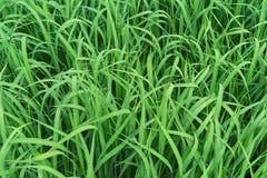 Zielona trawa T?o od zielonej trawy fotografia royalty free