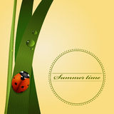 Zielona trawa, trzon, rosa krople, śliczna biedronka Lato sezon Zdjęcia Royalty Free