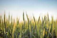 Zielona trawa w artystycznym składzie obrazy royalty free
