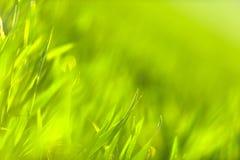 Zielona trawa w artystycznym składzie fotografia royalty free