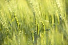 Zielona trawa w artystycznym składzie obraz stock