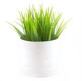 Zielona trawa w białym garnku Obrazy Royalty Free