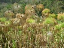 Zielona trawa w Boquete Panama zdjęcia stock