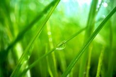 Zielona trawa w górę super makro- strzelaniny obraz royalty free