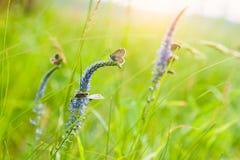 Zielona trawa w motylach i łące Fotografia Royalty Free
