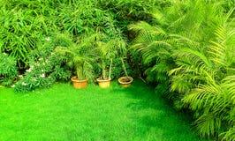 Zielona trawa w ogródzie zdjęcia stock