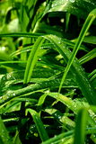 Zielona trawa w ogródzie Fotografia Stock