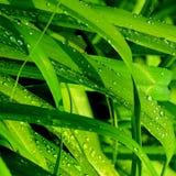 Zielona trawa w ogródzie Fotografia Royalty Free