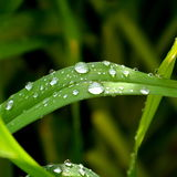 Zielona trawa w ogródzie Zdjęcia Royalty Free
