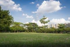 Zielona trawa w parku Obraz Stock