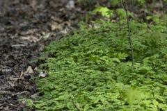 Zielona trawa w parku Obrazy Royalty Free