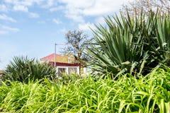 Zielona trawa w południe na niebieskim niebie z chmurami i budynków ludźmi obrazy royalty free