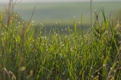 Zielona trawa w wod kroplach dla tła obrazy stock