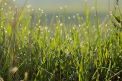 Zielona trawa w wod kroplach dla tła zdjęcie stock