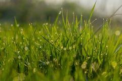 Zielona trawa w wod kroplach dla tła zdjęcia royalty free