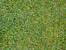 Zielona trawa w zakończeniu w górę tekstury dla tła Obrazy Royalty Free