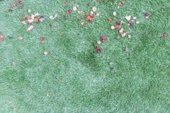 Zielona trawa z kwiatów płatkami zdjęcia royalty free