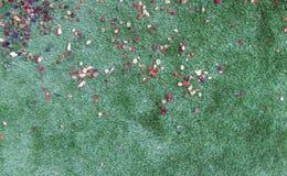 Zielona trawa z kwiatów płatkami zdjęcia stock