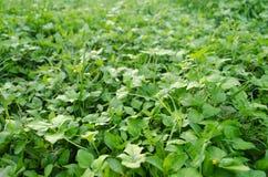 Zielona trawa z liśćmi w perspektywie obraz royalty free