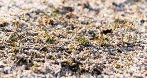 Zielona trawa z rankiem Obraz Royalty Free