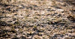 Zielona trawa z rankiem Fotografia Stock