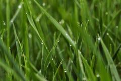 Zielona trawa z rosą, zakończenie w górę zdjęcie stock
