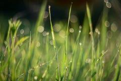 Zielona trawa z rosa kropel bokeh tekstury tłem Obrazy Royalty Free