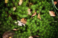 Zielona trawa z spadać jesień liśćmi Zdjęcia Royalty Free