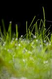 Zielona trawa z wodą opuszcza tło Zdjęcie Stock
