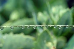 Zielona trawa zakrywająca z wodnych kropelek dewdrops Obrazy Stock