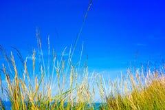 Zielona trawa, zieleni pole Obraz Stock