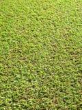 Zielona trawa, zieleni pole z światłem Obrazy Stock