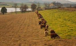 zielona trawy strona przeciwna Fotografia Royalty Free