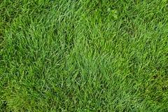 Zielona trawy tła tekstura Obrazy Royalty Free