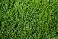 Zielona trawy tła tekstura Zdjęcie Stock