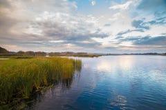 Zielona trzcinowa pobliska woda na zadziwiającym nieba tle Zdjęcie Royalty Free