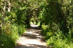 Zielona tunelowa ścieżka w naturalnym parku fotografia stock